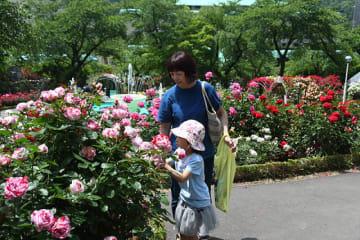 咲き誇るバラを観賞する観光客