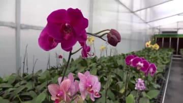 大きく「開花」する花卉産業 福建省漳浦県