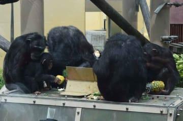 ほとんど無くなった誕生日ケーキの中からかろうじて果物を手にすることができたロジャー(左から2匹目)=左京区・市動物園