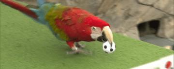 サッカー女子W杯フランス大会 勝敗を動物たちが予想 画像
