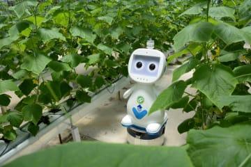 福建省初のAI・5G農業用ロボット、ハウスの巡回点検に投入