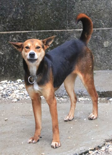 2018年3月に徳島市内で女児を襲った猟犬