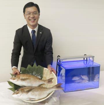 小さなマダイが泳ぐ水槽の横で、すしネタとして加工できる大きさのマダイを持つくら寿司の担当者=18日
