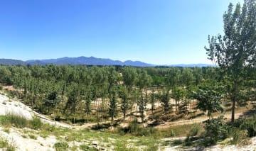 北京・天津地域の風砂対策進む 整備地域で森林率54%に