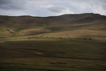 草原に広がる初夏の風景 モンゴル国