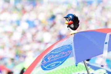 ヤクルトが8月13日に「サザエさん」とコラボイベントを実施すると発表【写真:荒川祐史】