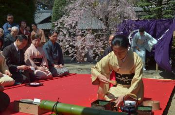 シダレザクラの花びら舞う中で開かれた水戸何陋会の茶会=水戸市元吉田町