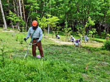 ふくしま植樹祭会場内の「樹の森」で下草刈りなどを行う県職員ら