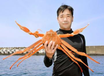 黄金ガニを手にする山下富士夫船長=福井県越前町大樟の越前漁港