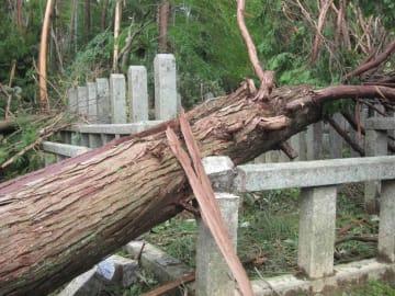 台風21号による倒木で損傷した十七烈士の墓(2018年9月)