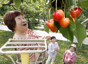山形県鶴岡市のサクランボ農園を訪れた、新潟県から訪れた女性ら=21日午後