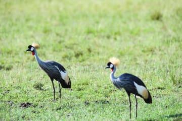 ケニア・マサイマラ国立保護区を訪ねて