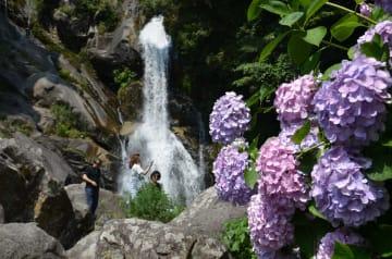見ごろを迎えたアジサイや滝を楽しむ観光客=唐津市相知町の見帰りの滝