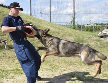 訓練する「ハンドラー」の警察官と警備犬=大阪市