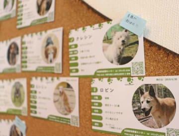 院内に張り出された京都動物愛護センターの保護犬や保護猫を紹介する名刺