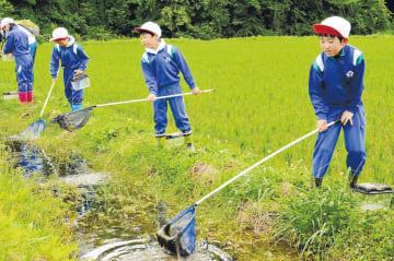 網を使って水路の生き物を探す児童たち