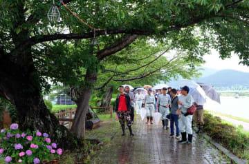 桂川沿いの桜並木の状態を確認する住民ら(京都府南丹市八木町)