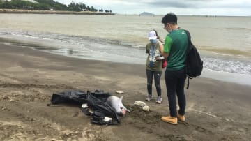 マカオ・コロアン島のハクサビーチで見つかったピンクイルカの死骸=2019年6月29日(写真:IAM)