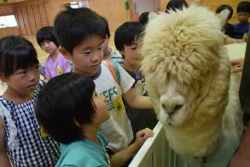 動物と触れ合う児童