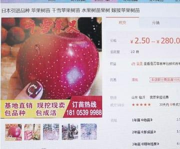 千雪と称した苗木が出品されている中国の通販サイト