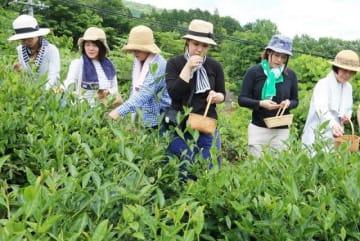 茶摘みを体験するアフタヌーンティー・ティールームの社員ら