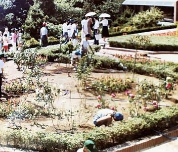 開園当時のバラ園(同園提供)