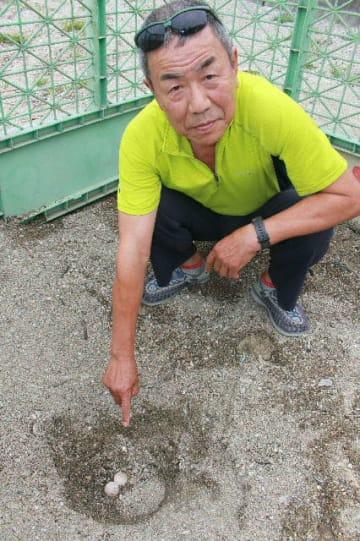 大分市志生木の砂浜で見つかったウミガメの卵を指さす石田和則さん=5日