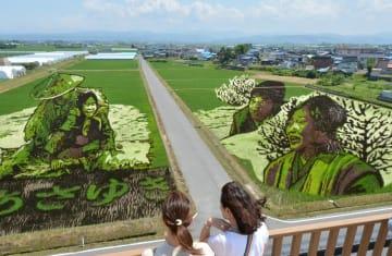 見ごろを迎えつつある田んぼアート第1会場の「おしん」=5日、田舎館村