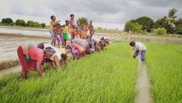 アフリカの食糧不足問題解決の一助に 中国のハイブリッド米