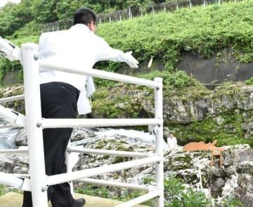 【岩穴めがけて生きたアユを投げ入れる参加者=大紀町滝原で】