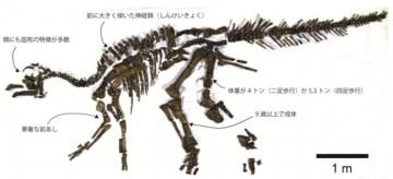 むかわ竜に見られる固有な特徴の例。及び、推定年齢と体重。(画像:穂別博物館発表資料より)
