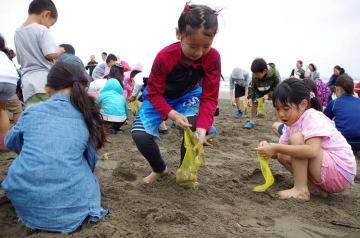 雨にも負けず、大粒のハマグリを拾い集める子どもら=7日、大網白里市
