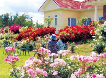 バラに囲まれて香りを楽しむ見物客