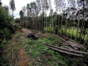無断でスギが伐採され、伐採業者の逮捕につながった国富町木脇の山林=9日午前