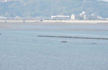 ハマグリなどの養殖場となる干潟が消えた干潮時の高梁川河口。西日本豪雨前には中央の石の列の手前に干潟があった