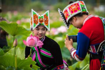 ハスの花の海が観光客を魅了 雲南省普者黒国家湿地公園