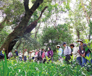 【小4以上参加者募集】天然林巡り、果実摘みも!『里山の恵みを感じるツアー』