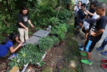 植物のネームプレートを取り付ける児童ら(和歌山県白浜町の南方熊楠記念館で)