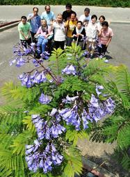今年初めて花を付けたジャカランダと作業所のメンバー=ひまわり作業所