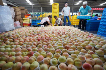 無錫にモモの季節到来 江蘇省