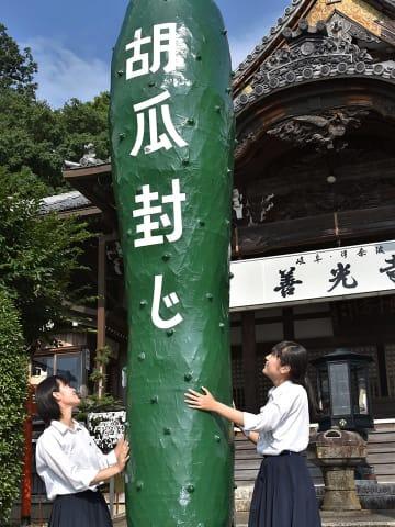 「胡瓜封じ」を前に境内に登場した張り子のジャンボキュウリ=岐阜市伊奈波通、善光寺