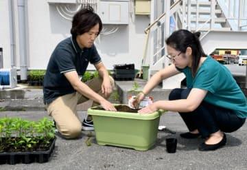 唐辛子の苗をプランターに植える今野さん(左)、東山さん