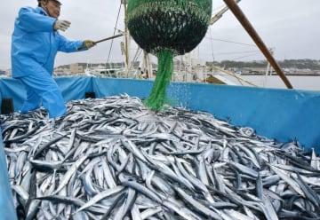 水揚げされたサンマ=2017年10月、福島県いわき市の小名浜港