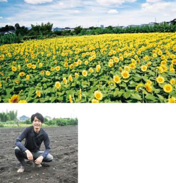 「思いもよらぬ」名所に横田農園約1万本のヒマワリ!見ごろは8月下旬?【町田市】