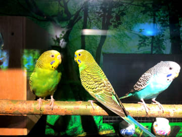 鳥の鳴き声に焦点を当てた特別展始まる 黒竜江省