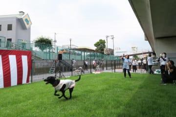 第3京浜道路の高架下を活用した盲導犬のフリーラン場=横浜市港北区の日本盲導犬協会神奈川訓練センター
