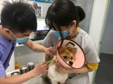 犬の電子身分証、チップ埋め込みが無料に 浙江省杭州市