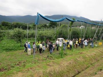 みんなでホップ畑に到着、(参加者が腰につけている緑の袋は収穫袋)