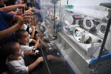2組の双子パンダ、生後1カ月の祝賀イベント開催 重慶動物園