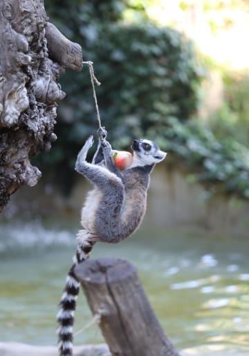 氷のデザート 動物たちの猛暑対策 ローマ動物園